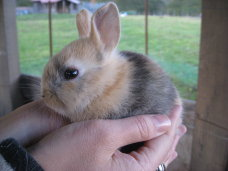 ウサギ1.jpg